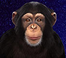 Бот обезьяна